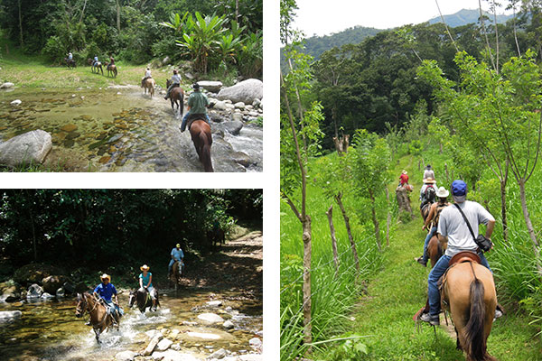 Horseback riding in the Cangrejal valley half day excursion